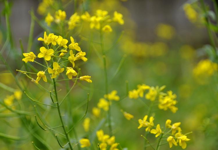 Haste floral
