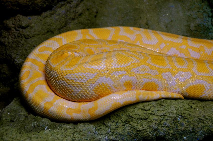 Ela é uma cobra