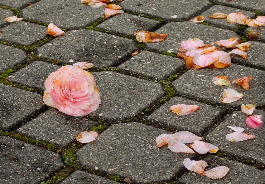 Das pétalas espalhadas pelo chão